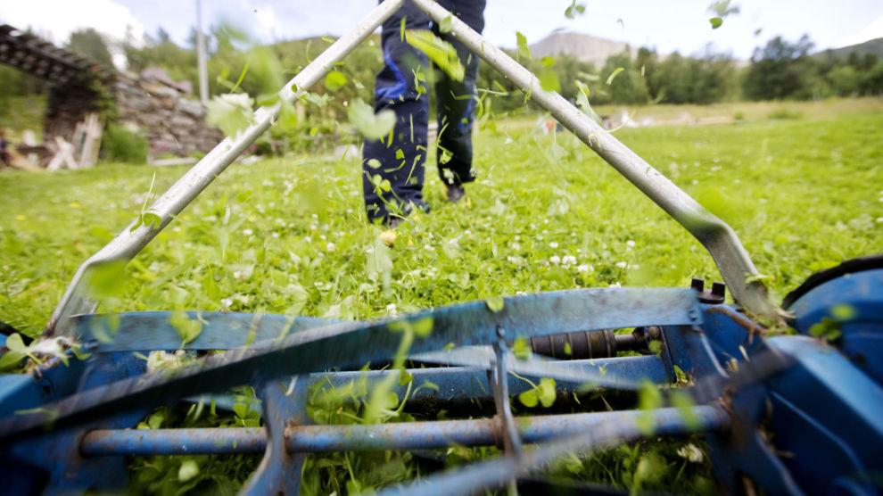 FIN TRIM: Å gå rundt med en gammeldags gressklipper er god trening, og så blir plenen veldig fin.