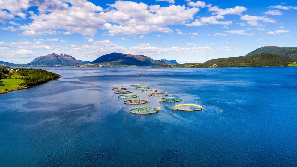 TILBAKE TIL LAKS: Delphi Fondene søker trygg havn i oppdretssbransjen. Konsumaksjer som mat er mindre utsatt for støyen fra handelskonfliktene.