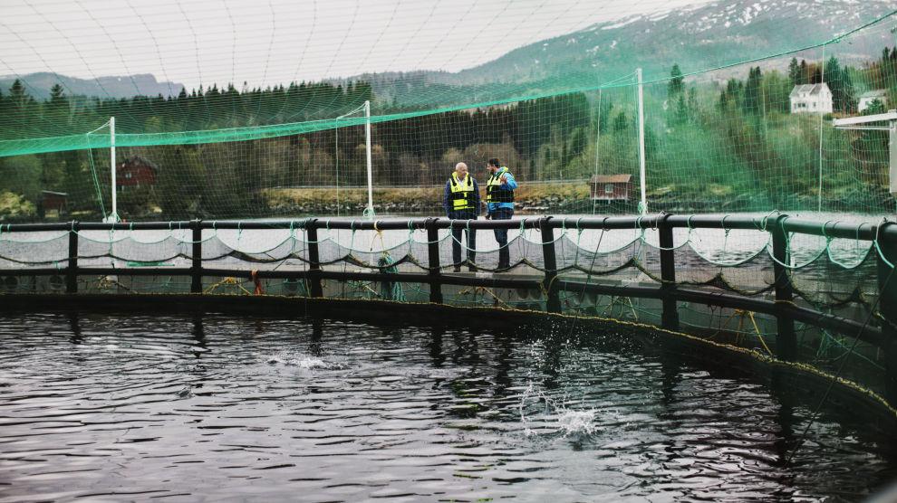 HOPPER OG SPRETTER: De lukkede merdene har strøm som gir fisken mosjon, og i motsetning til tradisjonelle oppdrettsanlegg har de lav dødelighet på fisken.