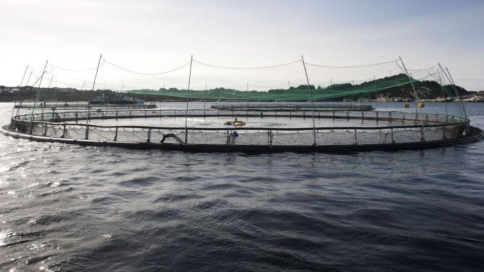 Et matfiskanlegg i Øygarden. Arkivfoto: Marit Hommedal / NTB scanpix